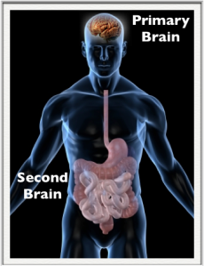 Primary_Second-Brain-Large