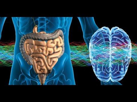 cerebro-intestino