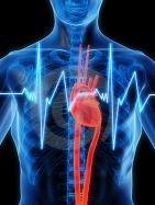 cardiovascular-diseases_01